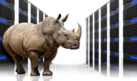 Safe server. Rhino in  datacentre with lots of server Royalty Free Stock Images