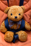 Safety belt & teddy bear Stock Photos