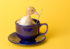 Safety Duck Stock Photo