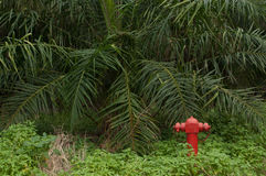 Safety First. Even in deep small forest has a fire hydrant. Water is supplied by the nearest river Stock Photo
