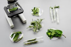 Safety food. Laboratory for food analysis. Herbs, greens under microscope on grey background top view Royalty Free Stock Photography