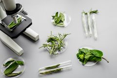 Safety food. Laboratory for food analysis. Herbs, greens under microscope on grey background top view Stock Images