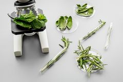 Safety food. Laboratory for food analysis. Herbs, greens under microscope on grey background top view Stock Photo