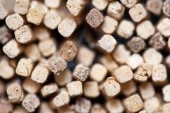 Safety Match Sticks stock photo