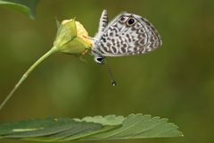 Blue Marine Butterfly Royalty Free Stock Photos