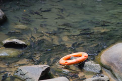 Safety Torus. Lifeless rubber ring placed on the stream to help the water fall immediately Stock Image