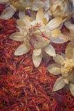 Safflower, false saffron Carthamus tinctorius. Royalty Free Stock Photo