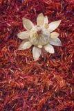 Safflower, false saffron Carthamus tinctorius. Royalty Free Stock Photography