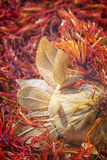 Safflower, false saffron Carthamus tinctorius. Stock Photography