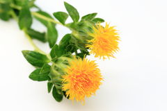 Safflower Stock Images