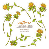 Safflower vector set. Safflower plant vector set on white background Royalty Free Stock Images