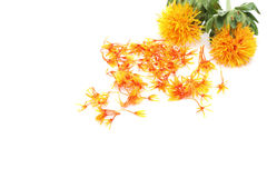 Safflower in a white background Royalty Free Stock Photos