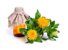 Safflowerväxt med olja i flaskan arkivbild