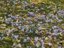 saffran Royaltyfria Bilder