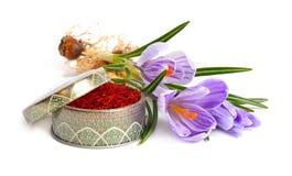 Saffran ?r en krydda som h?rledas fr?n den sativus blomman av krokus bakgrund isolerad white royaltyfri foto