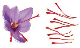 Saffron Stock Photography