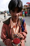 Saffron Boy Stock Image