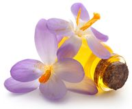 Saffron crocus flower with extract. In a bottle over white Stock Photography