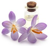 Saffron crocus flower with extract. In a bottle over white Royalty Free Stock Image