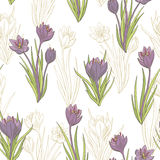 Saffron crocus flower graphic color seamless pattern sketch illustration Royalty Free Stock Photography