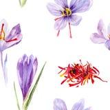 Saffron crocus flower watercolor hand drawn illustration vector illustration