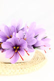 Saffron Crocus flowers Royalty Free Stock Images