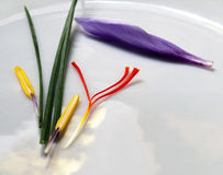 Saffron Crocus Parts Royalty Free Stock Photography