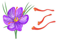 Saffron with flower. Isolated on a white background Stock Photography