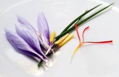 Saffron Flower Parts. Saffron crocus flower parts after harvesting for expensive red saffron stigmas Royalty Free Stock Image