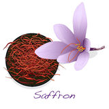 Saffron flower set. Vector. Royalty Free Stock Image