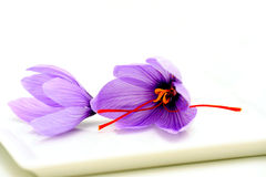 Saffron Flowers Royalty Free Stock Photos