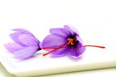 Saffron Flowers Royalty Free Stock Photos