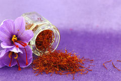 Saffron flowers Royalty Free Stock Images