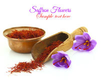 Saffron flowers Royalty Free Stock Image