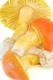 Saffron Milk Cap Stock Image