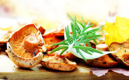 Saffron milk cap in the kitchen Royalty Free Stock Photography