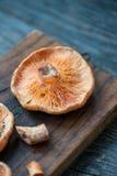 Saffron Milk Cap mushrooms Royalty Free Stock Images