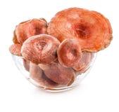 Saffron milk caps (Lactarius deliciosus) in tray Stock Image