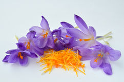 Saffron spice. Saffron or Crocus sativus, view on heap of spicy stamens and pestle surrounded by crocus flowers waiting in process of spice production over white Stock Photography