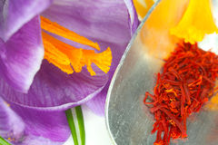 Saffron threads and pistils of Crocus Royalty Free Stock Photography