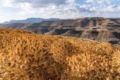 Saflor blommaf?lt mellan i Tigray, nordliga Etiopien, Afrika royaltyfria foton