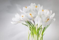 Safran blanc Image libre de droits