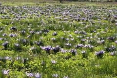 saffron stock photography