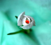 Safran en turquoise Photo stock