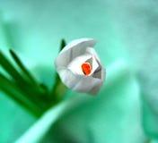 Safran en turquoise photographie stock libre de droits