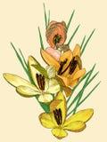 Safran jaune #02 Images libres de droits