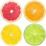 saftig citrus Royaltyfria Bilder