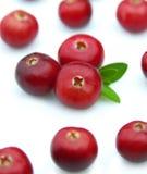 saftig cranberry arkivbilder
