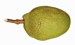 Saftig jackfruit Royaltyfria Bilder