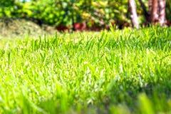 Saftig och grön gräsmatta med ett perspektivslut upp fotografering för bildbyråer